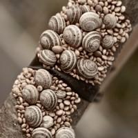 Snails In Bondage, Greg Klamt
